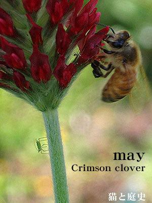 May_c
