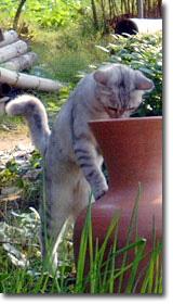 cat7_2